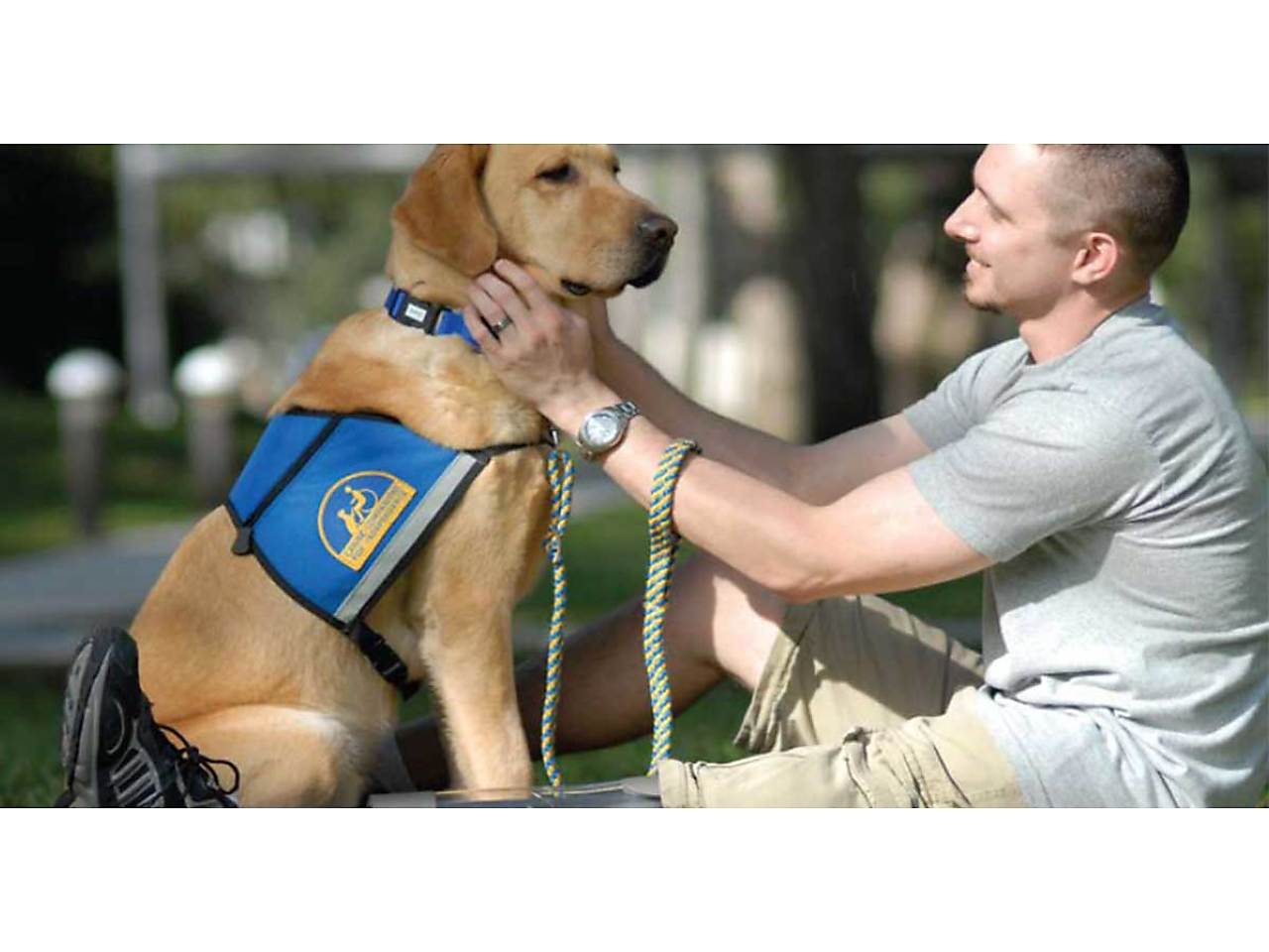 ptsd dpg.jpg - Service Dog for Veteran with PTSD image
